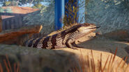 Planet Zoo Skink