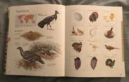 Visual Dictionary of Animals (72)
