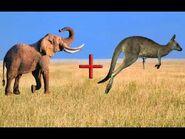 Elephants and Kangaroos