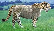 Jaguar switch zoo
