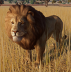 Lion, West African (Planet Zoo)