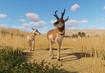 Pronghorn-antelope-planet-zoo