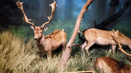 Rolling Hills Zoo Fallow Deer
