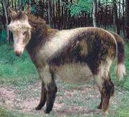 Shetland pony switch zoo