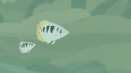 Archerfish (Wild Kratts)