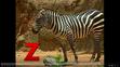 Brainy Baby Zebra