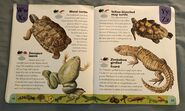 Reptiles and Amphibians Dictionary (26)