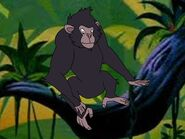 Rileys Adventures Eastern Chimpanzee