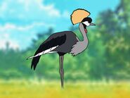 Rileys Adventures Grey Crowned Crane