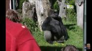 UTAUC Gorilla