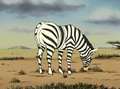 Animal Crackers Zebra