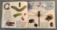 Bugs A-Z (2)