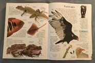 DK Encyclopedia Of Animals (163)