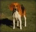 Dog-disneythinkfast