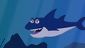 I'm An Animal Shark