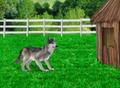 Little Einsteins Wolf