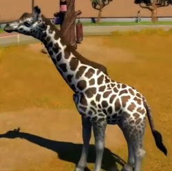 Nubian-giraffe-zootycoon3.png