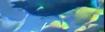 Screenshot 2021-03-23 at 3.45.54 PM