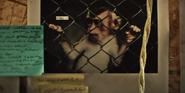 Zoo 2015 Monkey