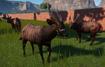 Bongo, Lowland (Planet Zoo)