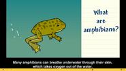 Brainpop Jr Frog