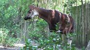 DAK Okapi