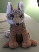 Hiro the Grey Fox Pup