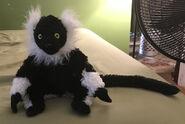 Jerome the Black and White Ruffed Lemur
