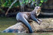 Otter, Giant (V2)