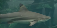 Pittsburgh Zoo Shark