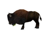 Zoo Tycoon Bison