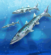Barracuda ZT
