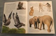 DK Encyclopedia Of Animals (5)