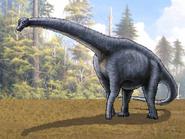 Dm bothriospondylus