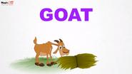 MagicBox Goat