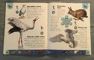 Polar Animals Dictionary (21)