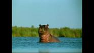 WAET Hippo