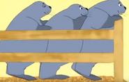Funny-animals-2-seal
