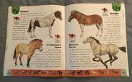 Horse Dictionary (19)