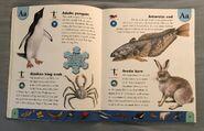 Polar Animals Dictionary (1)