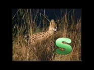 S is for Serval