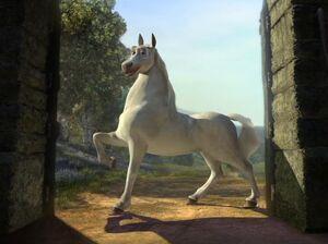 Stallion Donkey.jpg