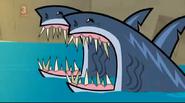 TDI Sharks