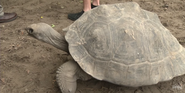 Tampa Lowry Park Zoo Tortoise