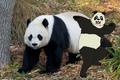 Bao-Bao and Real Giant Panda