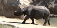 Central Florida Zoo Rhino