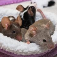 Noah's Ark Wombats Kangaroo Rats Mice Giraffes Otters Cheetahs Hedgehogs Opossums