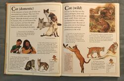 The Kingfisher First Animal Encyclopedia (13).jpeg