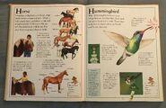The Kingfisher First Animal Encyclopedia (35)