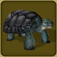 Zt2 Galapagos tortoise